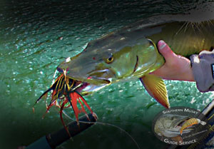 New River Musky on the Fly